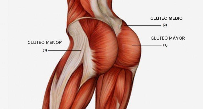 GLÚTEOS 30/30 -músculos-glúteos-musculos gluteos