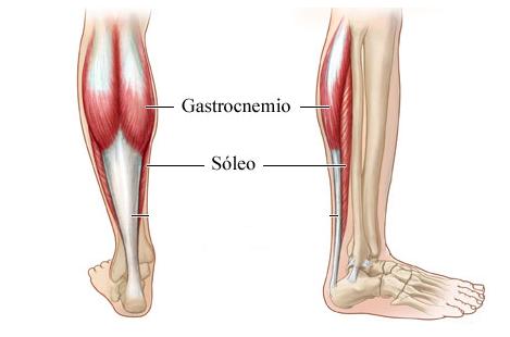 músculos-de-las-pantorrillas_piernas