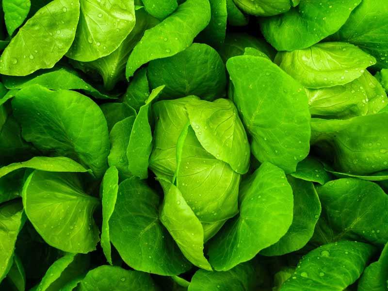 lista-de-la-compra-fitness-verdura